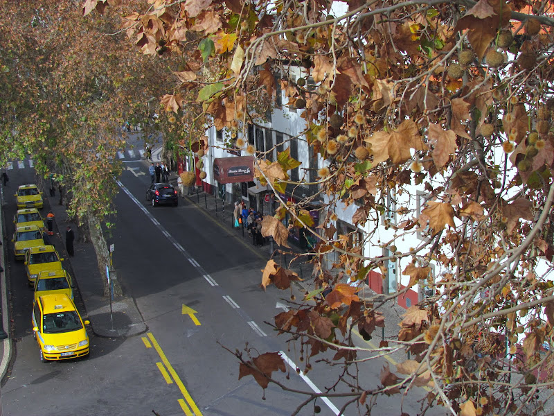 old tree leaves and taxis