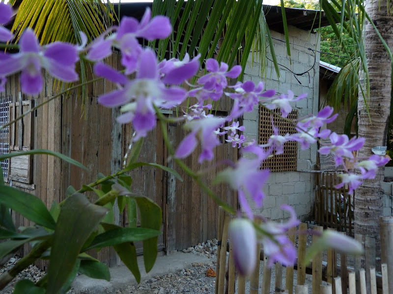 Camotes et Poron island - philippines1%2B843.JPG
