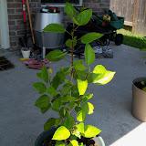 Gardening 2010, Part Three - 101_4491.JPG