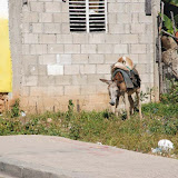 dominican republic - 25.jpg