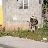 dominican republic - 25.jpg