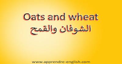 Oats and wheat الشوفان والقمح