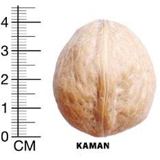 Каман грецкий орех