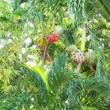 Key West Vacation - 116_5425.JPG