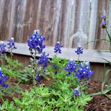 Gardening 2014 - 116_1461.JPG