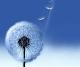 glex_default_wallpaper16.png