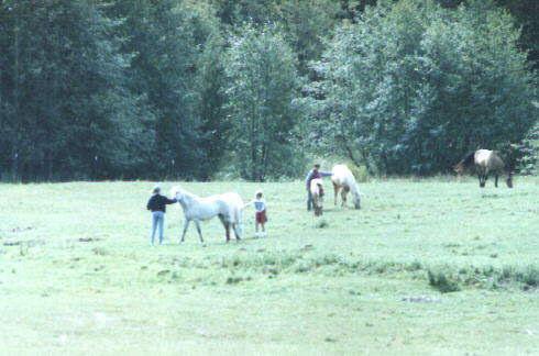 pasture2 - Llenroc Field