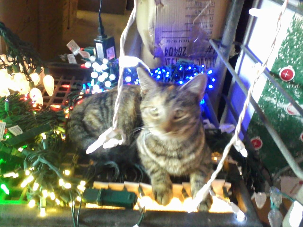 Christmastime - 1129132722.jpg