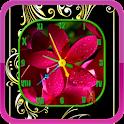 Frangipani Clock icon