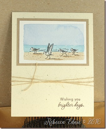 wc seabird brighter days