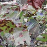 Barwy jesieni cz. 1: Uroczysko Kostrze vel Fort Bodzów