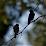 Unique Birding, LLC's profile photo
