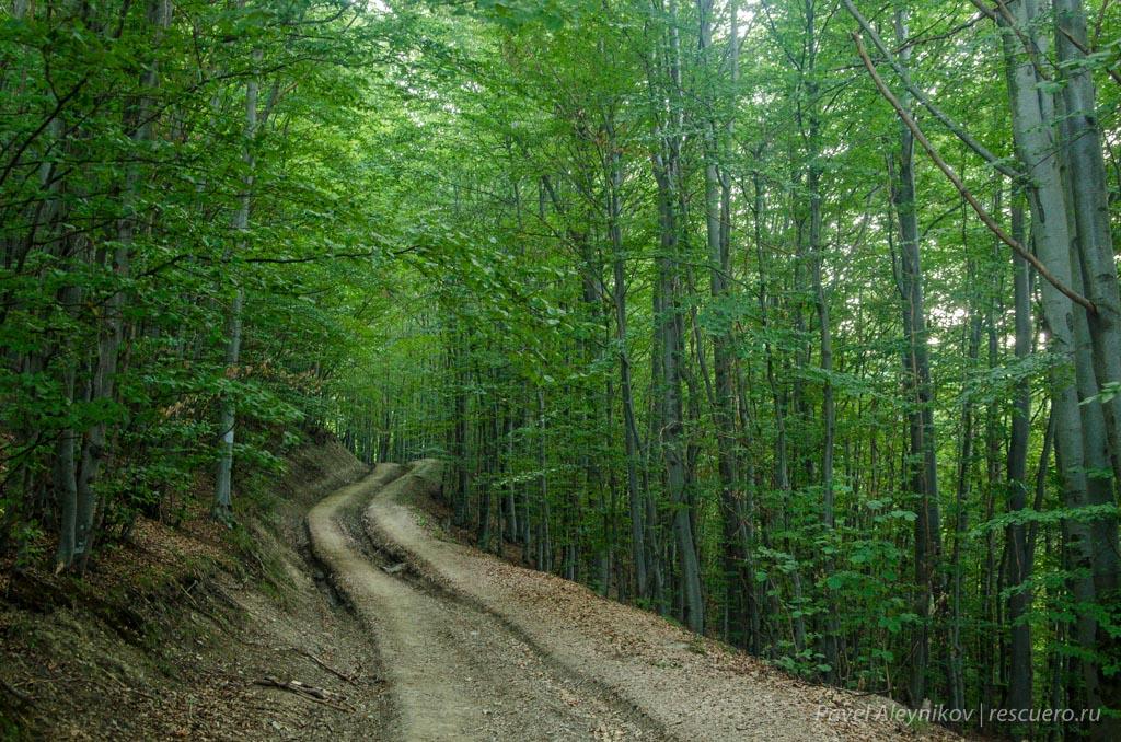 Дорога через лес на Петрос