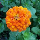Gardening 2011 - 100_8197.JPG