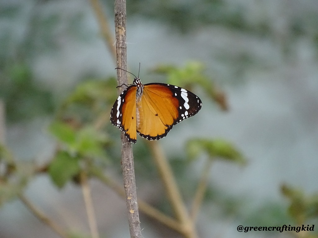 [Butterfly%5B2%5D]