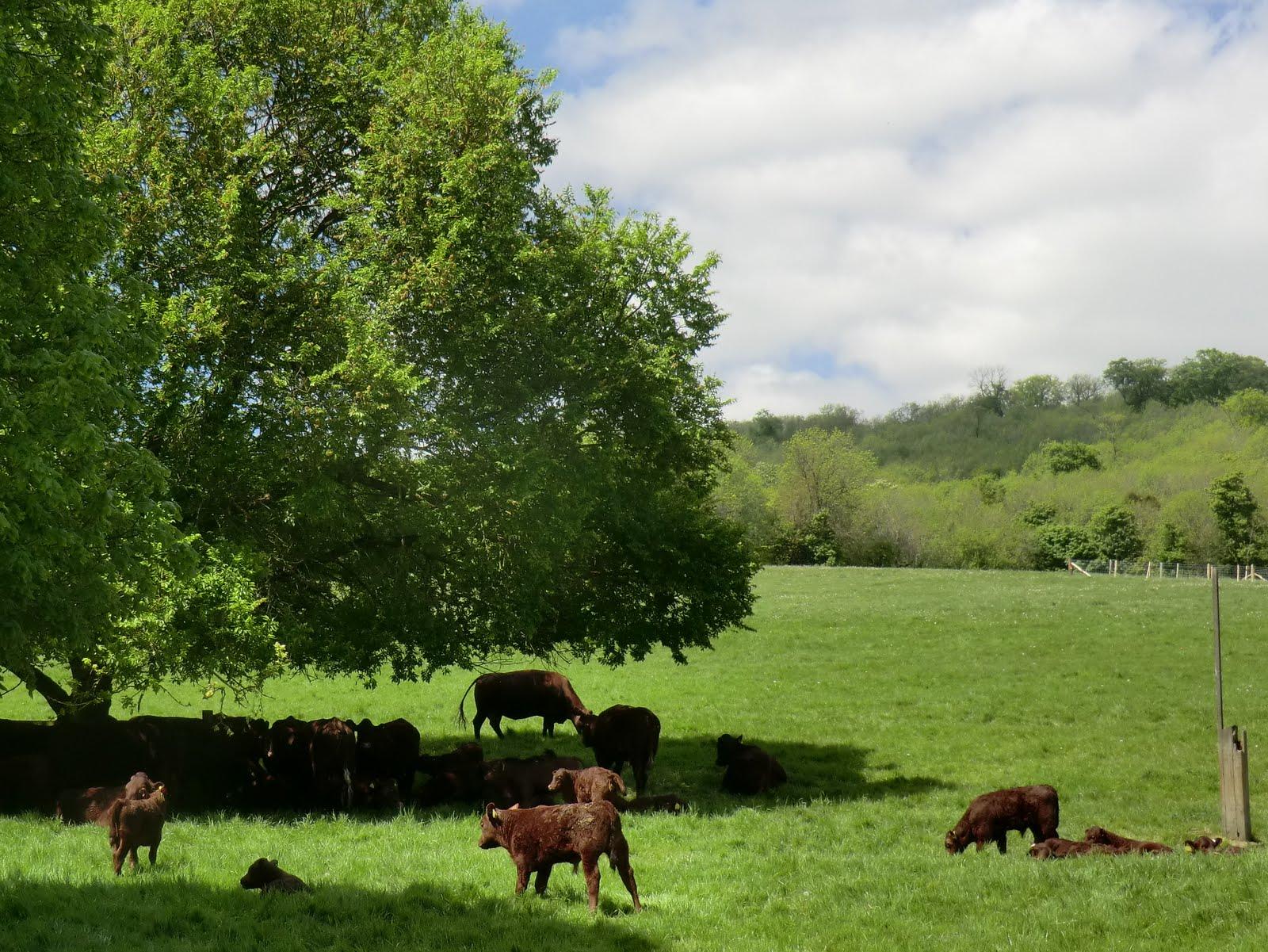 CIMG8139 The Titsey Herd