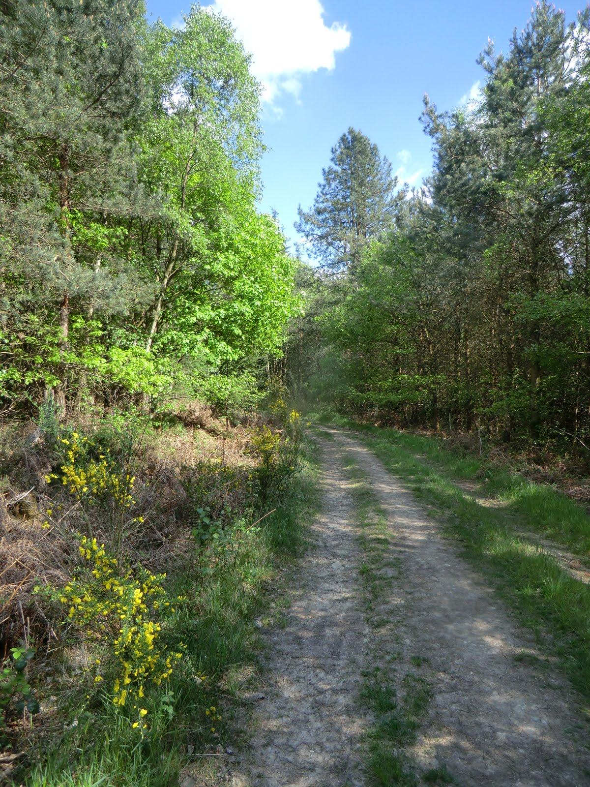 CIMG4303 Through Tower Wood