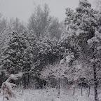 Зимняя уборка в Дендрарии 062.jpg