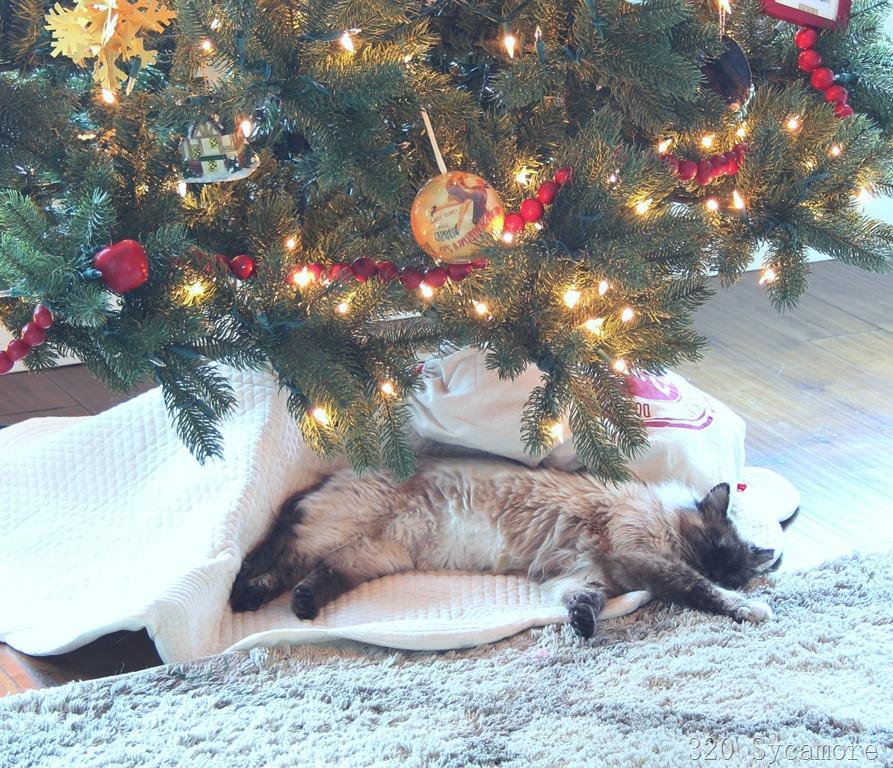 [gatito-under-tree2]