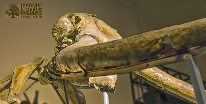Elefante de Transfesa. Museo de Ciencias Naturales.