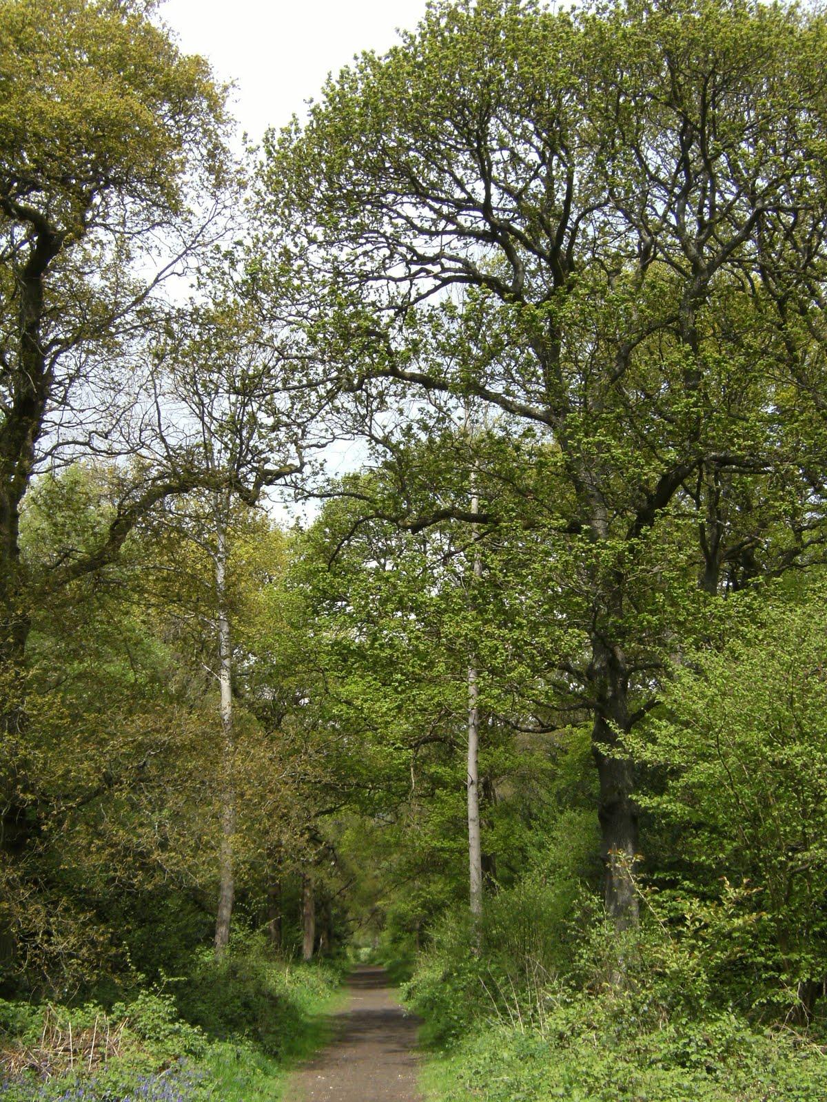 1005120032 Kings Wood
