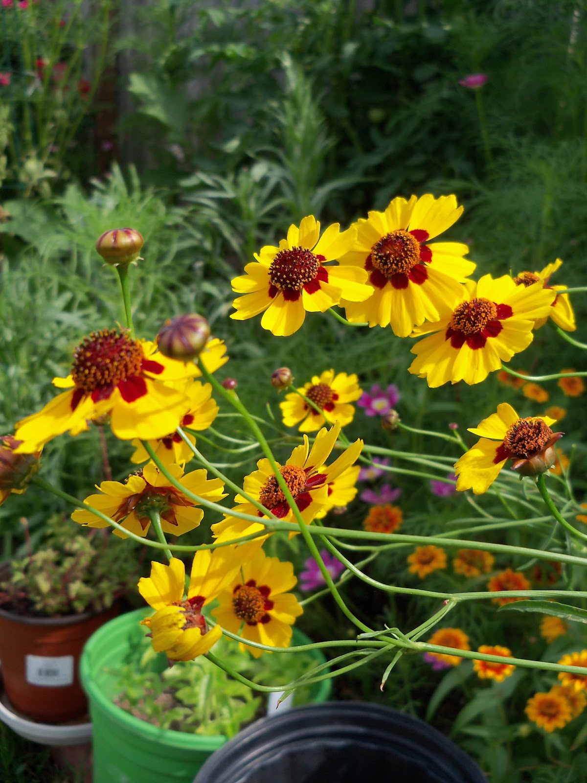 Gardening 2010, Part Three - 101_3759.JPG