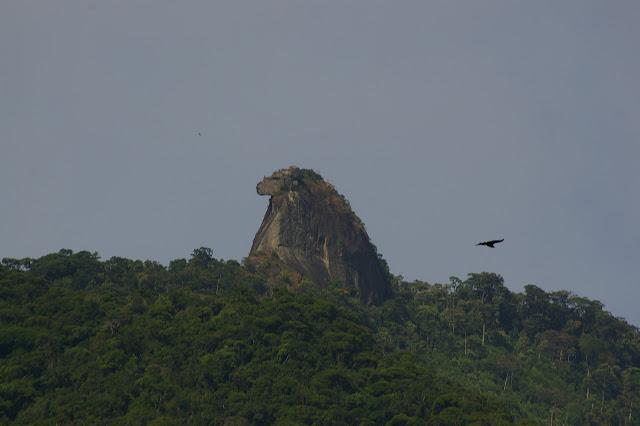 Pain de sucre (Inselberg) à plus de 900 m d'altitude, Abrâo (Ilha Grande, RJ), 17 février 2011. Photo : J.-M. Gayman