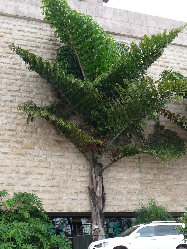 CHINE.YUNNAN.KUN MING Temple, jardin horticole,Musée des minorites - P1270402.JPG