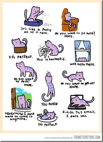 cat behavior