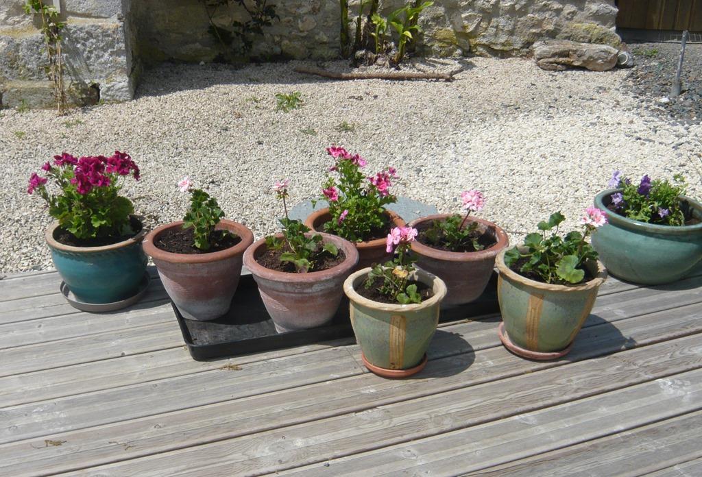 [Spring+flowers6%5B3%5D]