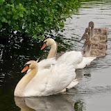Vogels en dieren - IMG_9180.JPG
