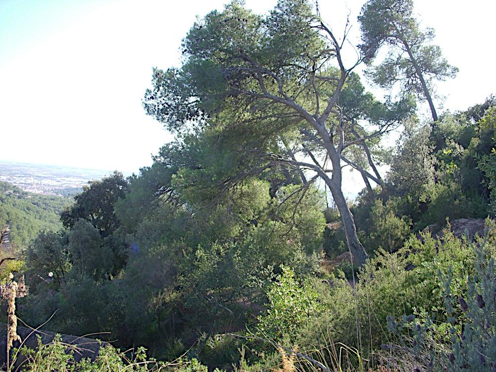 Sortida Castell Eramprunyà - Pioners 2009 - DSCN0993.JPG