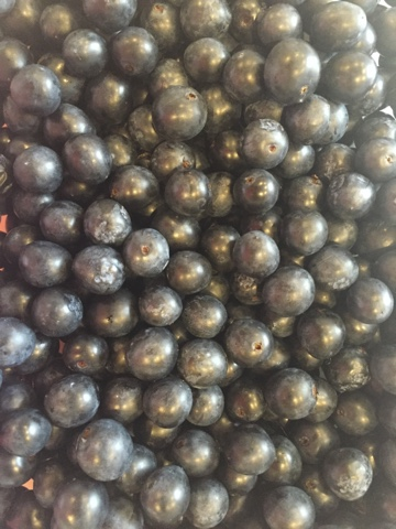 how to make sloe gin quick