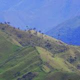 Les Andes entre El Limonal et la Merced de Buenos Aires, 2600 m (Imbabura, Équateur), 24 novembre 2013. Photo : J.-M. Gayman