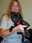 Daisy-Arnold-dog-veterinaria-kingston-nh.jpg