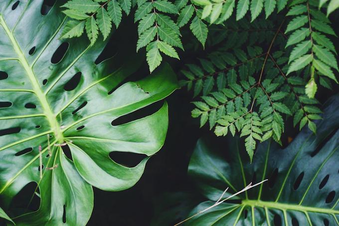 How do Plants Provide Oxygen?