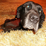 Star & True Blues February 21, 2008 Litter - HPIM0938.JPG
