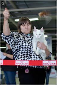 cats-show-24-03-2012-fife-spb-www.coonplanet.ru-044.jpg