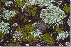 _IGP7088-Close up of Lichen on the path