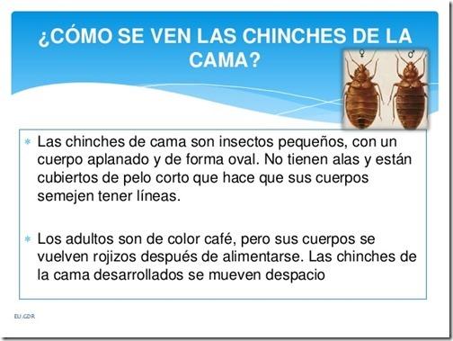 chinche-de-cama-cimex-lectularius-7-638