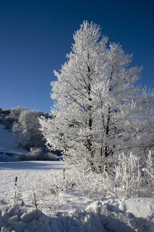SnowBR27