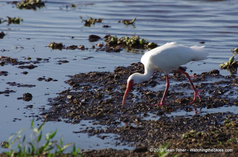 04-06-12 Myaka River State Park - IMGP9912.JPG