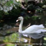 04-07-12 Homosassa Springs State Park - IMGP4563.JPG
