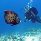 French angelfish (pier at Windsock)