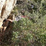 Sortida Sant Salvador de les espasses 2006 - CIMG8259.JPG