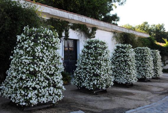 16.000 plantas de flor para la proclamación de Felipe VI
