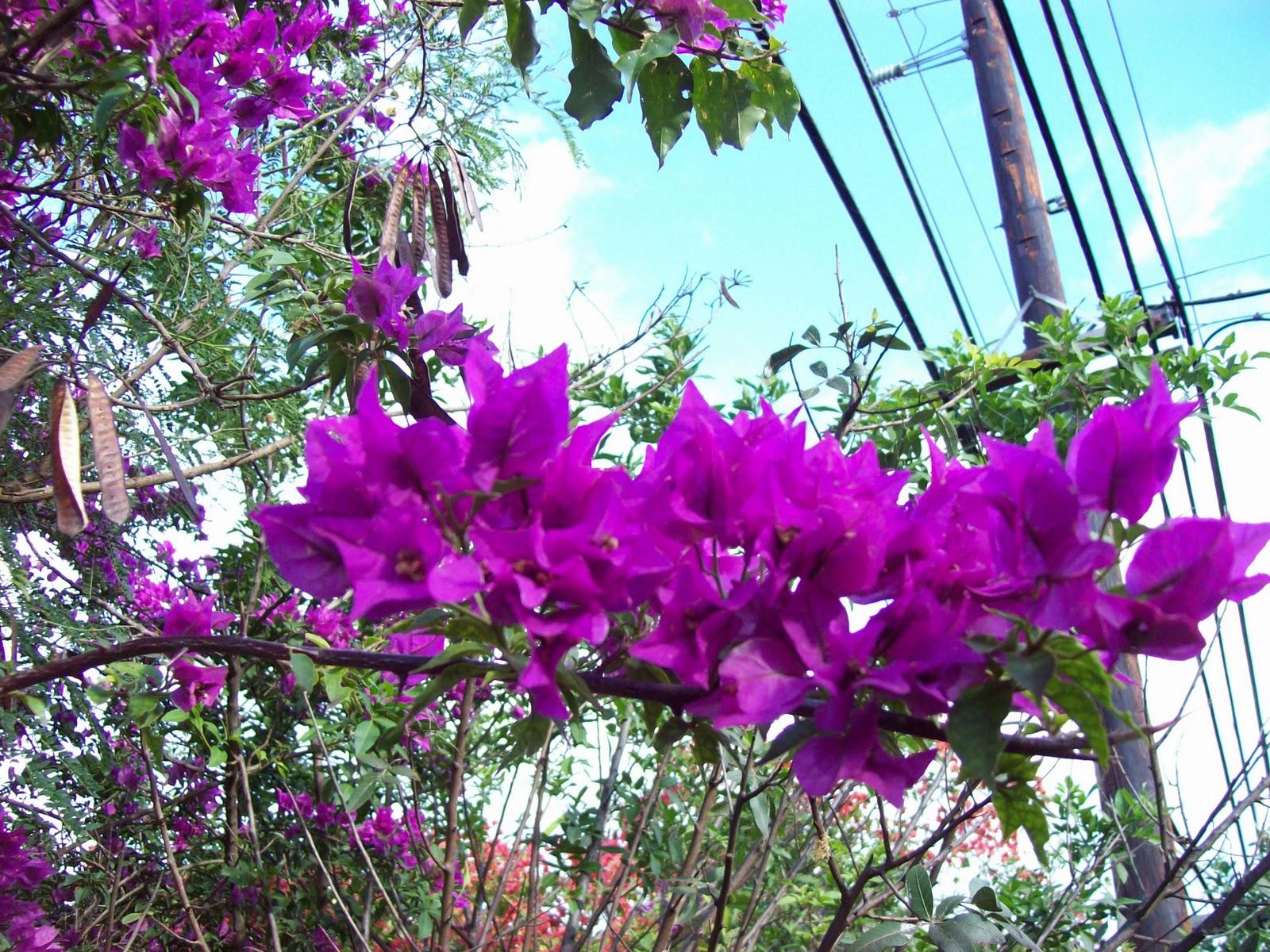 Hawaii Day 6 - 100_7631.JPG