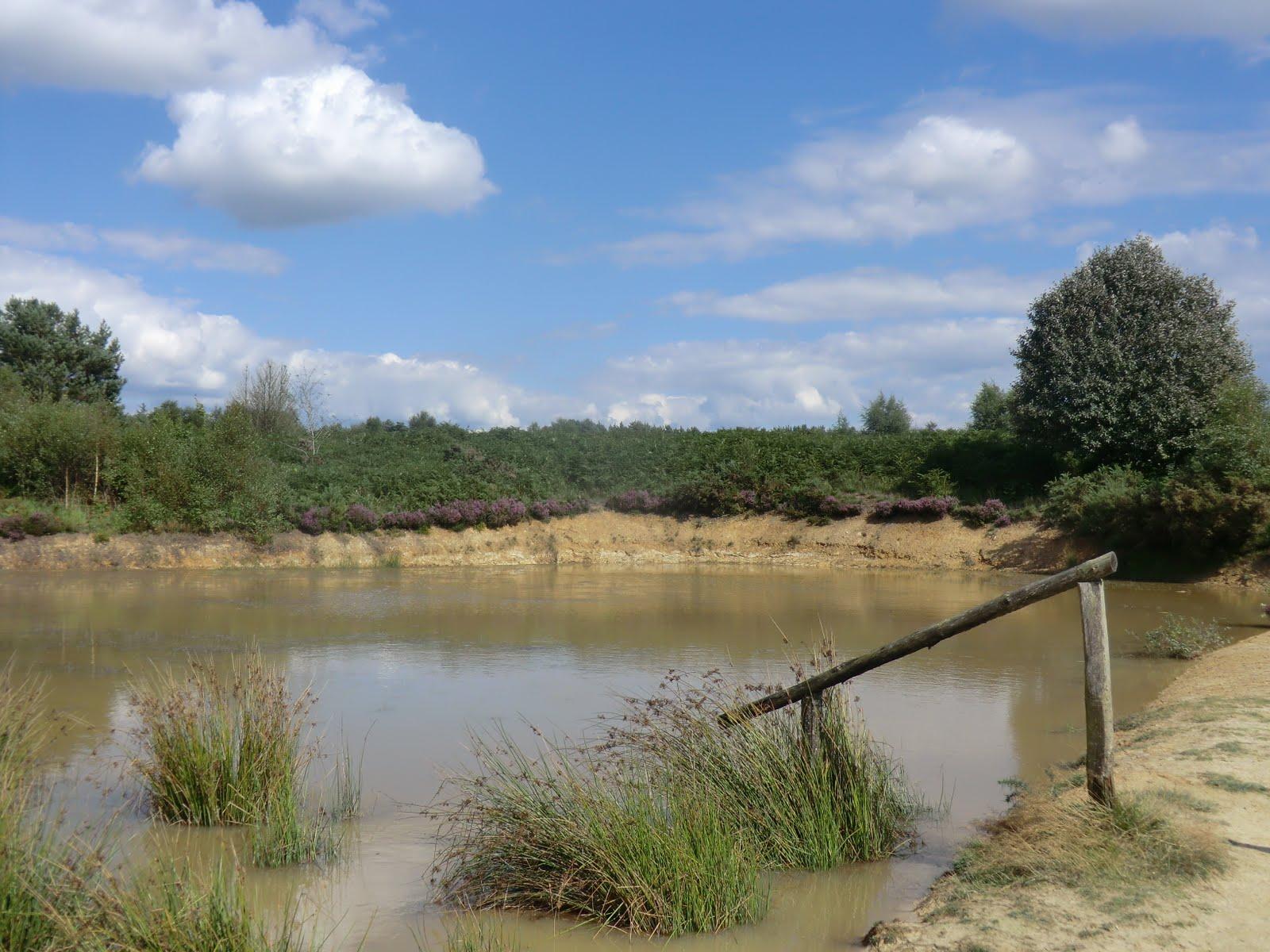 CIMG3429 New pond, Ashdown Forest