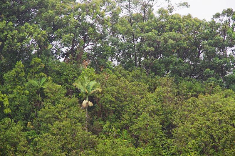 06-23-13 Big Island Waterfalls, Travel to Kauai - IMGP8857.JPG