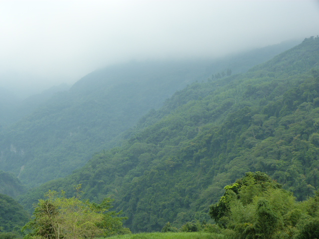 TAIWAN.Hsinchu et une minuscule partie du parc national de Sheipa, l empire du brouillard... - P1070852.JPG